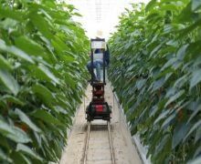 Agricultura 4.0 podría dejar fuera de juego a redes campesinas