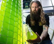 Algas para la producción de cerveza cero emisiones