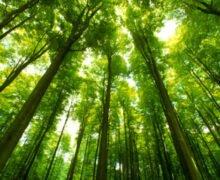 Bosques densos pueden disminuir el calentamiento global