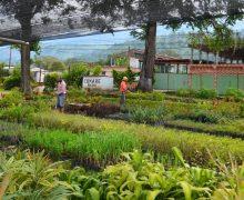 Conare desarrolla proyectos para la reforestación