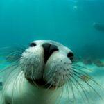 Día Mundial de los Océanos: fuente de vida y sustento humano