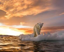 El audaz plan para salvar el Ártico con vidrio
