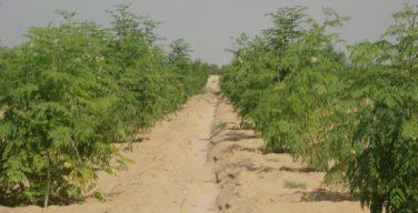 Liquid NanoClay convierte arena del desierto en tierra para cultivo