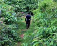 Mini-bosques de rápido crecimiento se extienden por Europa