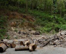 Venezuela tala sus bosques por falta de gas